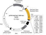 pHTN HaloTag(R) CMV-neo Vector 20ug