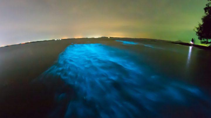 Биолюминесценция и биотехнология: холодный свет сияния природы и биология